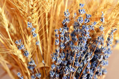 Lavender and wheat Royalty Free Stock Images