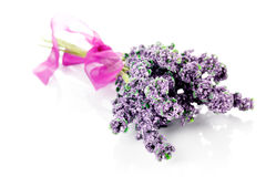 Lavender on a white Stock Photography