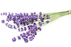 Lavender on white Stock Photos