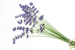 Lavender on white Royalty Free Stock Image