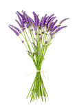 Lavender on white background Royalty Free Stock Image