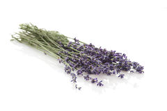 Lavender  on white background Royalty Free Stock Images