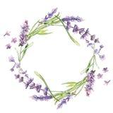 Lavender Wildflower στεφάνι λουλουδιών σε ένα ύφος watercolor που απομονώνεται απεικόνιση αποθεμάτων