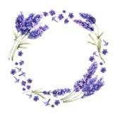 Lavender Wildflower στεφάνι λουλουδιών σε ένα ύφος watercolor που απομονώνεται Στοκ εικόνα με δικαίωμα ελεύθερης χρήσης