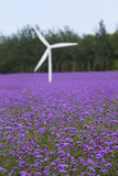 Lavender and windmill Royalty Free Stock Photography