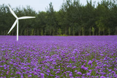 Lavender and windmill Royalty Free Stock Image