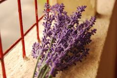 Lavender beside window royalty free stock image