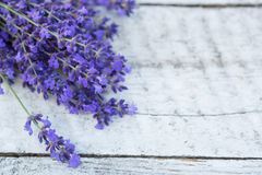 Lavender on a wooden background. Medicinal plant in bloom. Lavender on wooden background. Medicinal plant in bloom stock photography