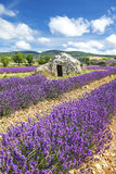 Lavender world Stock Photo