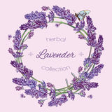Lavender wreath banner. Vector lavender flowers wreath banners on lilac background. Design for cosmetics, make up, store, beauty salon, natural and organic Royalty Free Stock Photography