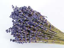 Lavender1. A Bunch of Dried Lavender Royalty Free Stock Images