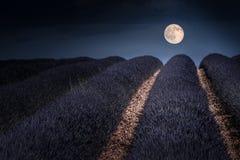 Lavendermoon, Провансаль Стоковая Фотография