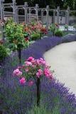 Lavenders και τριαντάφυλλα Στοκ φωτογραφία με δικαίωμα ελεύθερης χρήσης