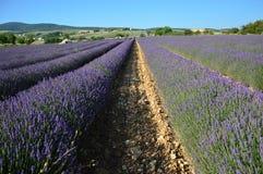 Lavenders στο νότο της Γαλλίας, Προβηγκία, sault Στοκ εικόνα με δικαίωμα ελεύθερης χρήσης
