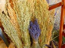 Lavenders στο νότο της Γαλλίας, Προβηγκία, sault Στοκ Εικόνες