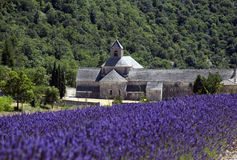 Lavenders and Abbey Royalty Free Stock Photo