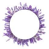 Lavendula-Kreisrahmen auf weißem Hintergrund Lizenzfreie Stockbilder