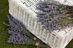Laventer. Lawender and white basket- stock photo Stock Photo