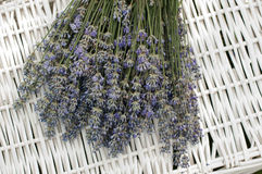 Laventer Stock Photography