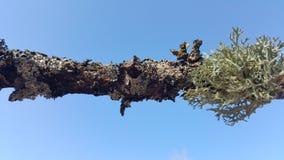 Laver på trädfilial Arkivbilder
