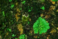 Laver uppstår i områden med hög fuktighet royaltyfri foto