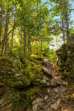 Laverty Falls Trail Path. (Fundy National Park, New Brunswick, Canada Royalty Free Stock Photography