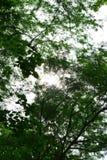 Laves che copre il cielo Fotografie Stock