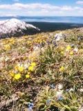 Lavinmaximum, berg i Yellowstone Arkivfoton