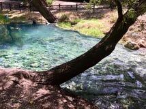 Lavino rzeka w parku Lavino, Scafa, Włochy Zdjęcia Royalty Free