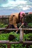 Lavora nel giardino Immagini Stock