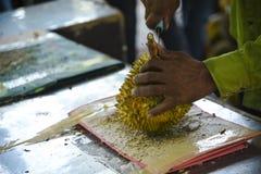 Lavorando al Durian Immagine Stock