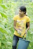 Lavorando alla terra dell'azienda agricola Fotografie Stock