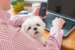 Lavorando con il cane a casa Immagini Stock