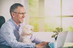 Lavorando con il cane a casa o l'ufficio Immagine Stock Libera da Diritti