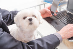 Lavorando con il cane nell'ufficio Fotografia Stock