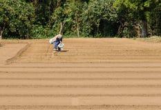 Lavorando nel campo, Natira, Giappone Fotografia Stock
