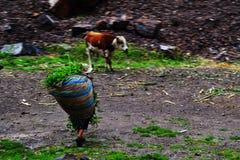 Lavorando nel Perù Fotografia Stock Libera da Diritti