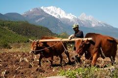 Lavorare al campo al piede della montagna della neve Immagine Stock