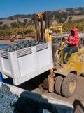 Lavoratore che equipaggia carrello elevatore con l'uva alla cantina Fotografia Stock