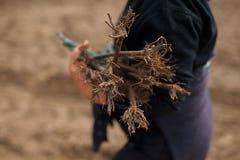 Lavoratore che pianta una piantina dell'uva Fotografia Stock