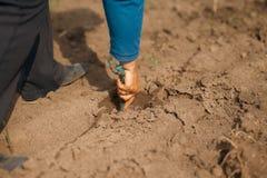Lavoratore che pianta una piantina dell'uva nella terra Immagine Stock