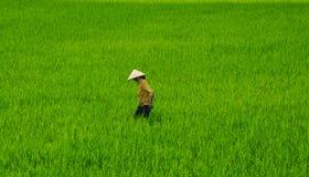 Lavoratore del giacimento del riso fotografia stock