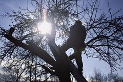 Lavoratore del od della siluetta Fotografia Stock Libera da Diritti