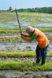 Lavoratore del riso, Indonesia Immagini Stock Libere da Diritti