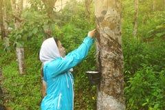 Lavoratore dell'albero di gomma Fotografie Stock