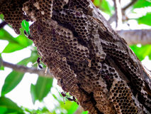 lavoratore della vespa e vespa dell'alveare sull'albero in giardino Immagine Stock Libera da Diritti