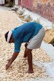 Lavoratore dello zenzero a Cochin forte, India Immagini Stock