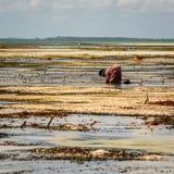Lavoratore di Zanzibar Fotografia Stock Libera da Diritti