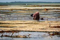 Lavoratore di Zanzibar Fotografie Stock Libere da Diritti