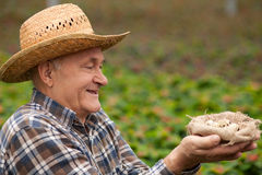 Lavoratore maschio anziano allegro con il prodotto biologico Fotografia Stock Libera da Diritti